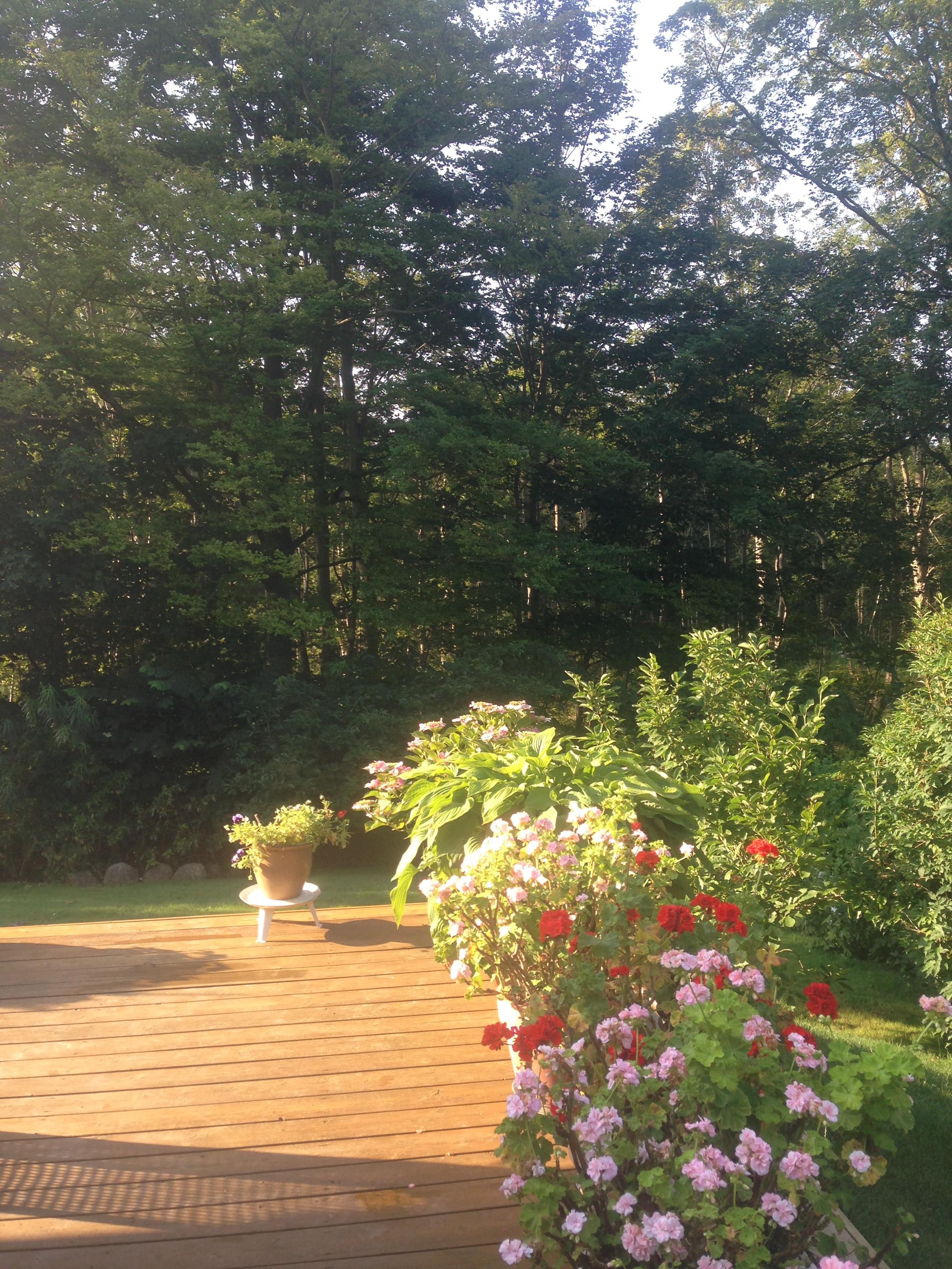 Billede 08-08-14 08.19.09