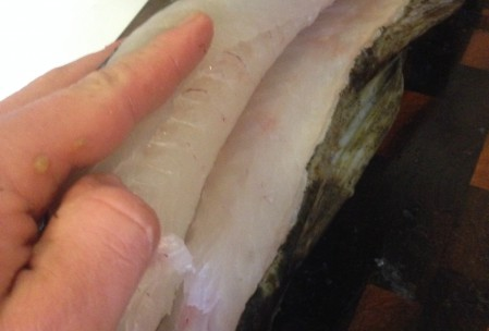 filtering af torsk (11)