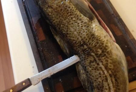 filtering af torsk (4)