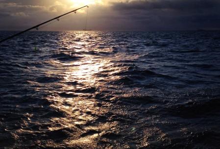 torske fiskeri