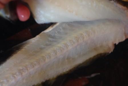 filetering af torsk