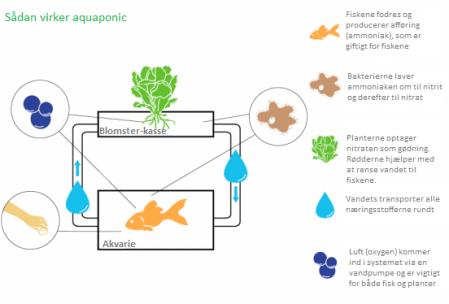 Sådan virker aquaponic