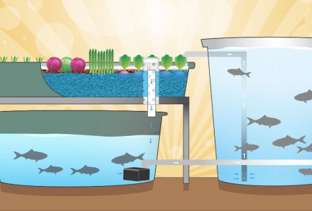 aquaponic-system