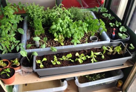 planter med aquaponic