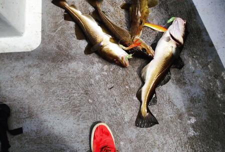 Fange torsk med fiskestang