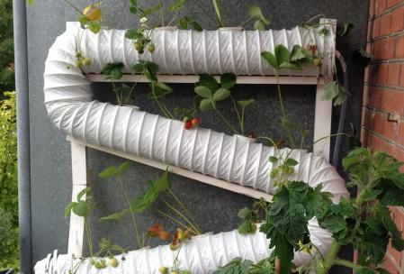 Hyrdroponic system strawberry