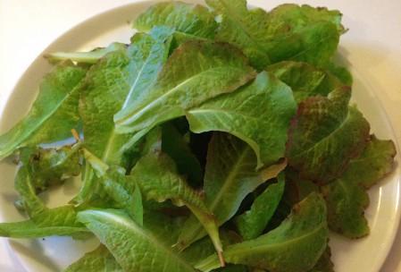 Salat fra drivhus