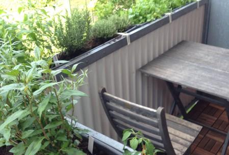Krydderurter i altankasser