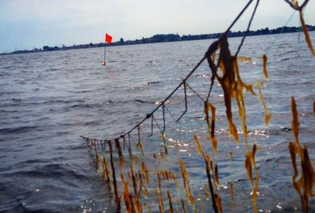 Garnfiskeri